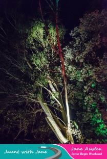 JWJ, Abbotsbury Subtropical Gardens - floodlit 18_10_15-04 (1000px)