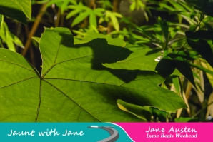 JWJ, Abbotsbury Subtropical Gardens - floodlit 18_10_15-05 (1000px)
