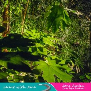 JWJ, Abbotsbury Subtropical Gardens - floodlit 18_10_15-06 (1000px)