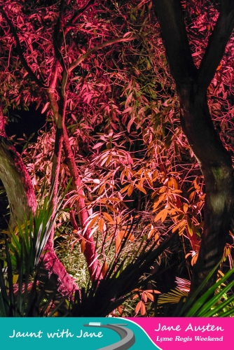 JWJ, Abbotsbury Subtropical Gardens - floodlit 18_10_15-07 (1000px)