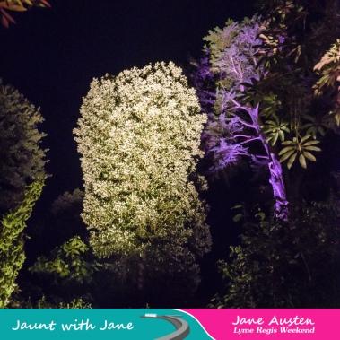 JWJ, Abbotsbury Subtropical Gardens - floodlit 18_10_15-08 (1000px)