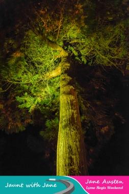 JWJ, Abbotsbury Subtropical Gardens - floodlit 18_10_15-12 (1000px)