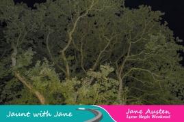JWJ, Abbotsbury Subtropical Gardens - floodlit 18_10_15-14 (1000px)