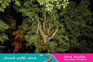 JWJ, Abbotsbury Subtropical Gardens - floodlit 18_10_15-20 (1000px)