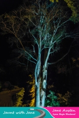 JWJ, Abbotsbury Subtropical Gardens - floodlit 18_10_15-21 (1000px)