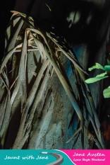 JWJ, Abbotsbury Subtropical Gardens - floodlit 18_10_15-22 (1000px)