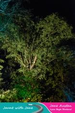 JWJ, Abbotsbury Subtropical Gardens - floodlit 18_10_15-24 (1000px)
