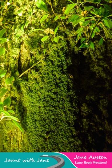 JWJ, Abbotsbury Subtropical Gardens - floodlit 18_10_15-28 (1000px)
