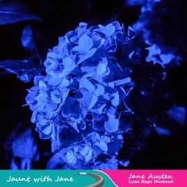 JWJ, Abbotsbury Subtropical Gardens - floodlit 18_10_15-37 (1000px)