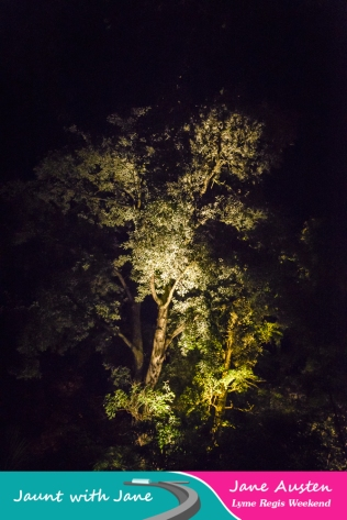 JWJ, Abbotsbury Subtropical Gardens - floodlit 18_10_15-41 (1000px)