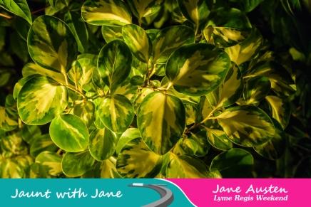 JWJ, Abbotsbury Subtropical Gardens - floodlit 18_10_15-47 (1000px)