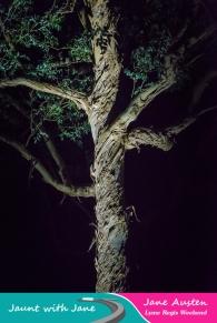 JWJ, Abbotsbury Subtropical Gardens - floodlit 18_10_15-48 (1000px)