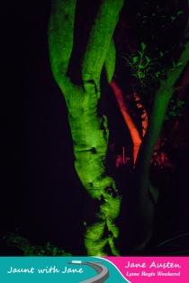 JWJ, Abbotsbury Subtropical Gardens - floodlit 18_10_15-50 (1000px)