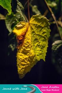 JWJ, Abbotsbury Subtropical Gardens - floodlit 18_10_15-51 (1000px)