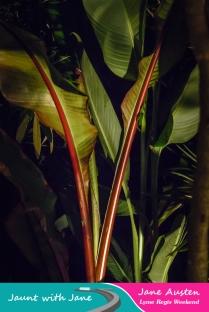 JWJ, Abbotsbury Subtropical Gardens - floodlit 18_10_15-52 (1000px)